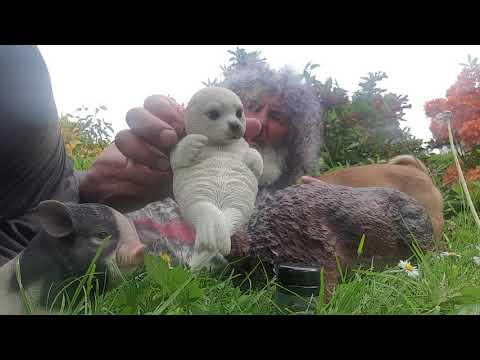 Robert Franz:Lebensverlängerung für Seeotter
