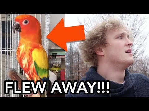 Thumbnail: MY BROTHERS PARROT FLEW AWAY (PRANK WARS)