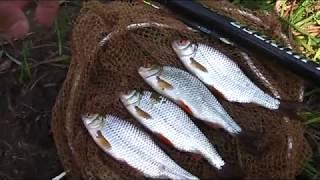 Ловля рыбы на поплавочную удочку . Рыбалка 2016  Fishing on the float rod . Fishing 2016(Ловля рыбы на поплавочную удочку. Рыбалка 2016 fishing В этом видео я расскажу как сделать прикормку а также..., 2016-07-29T11:00:27.000Z)