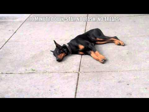 CHICAGO DOG TRAINING: 10 MINUTE DOWN STAY