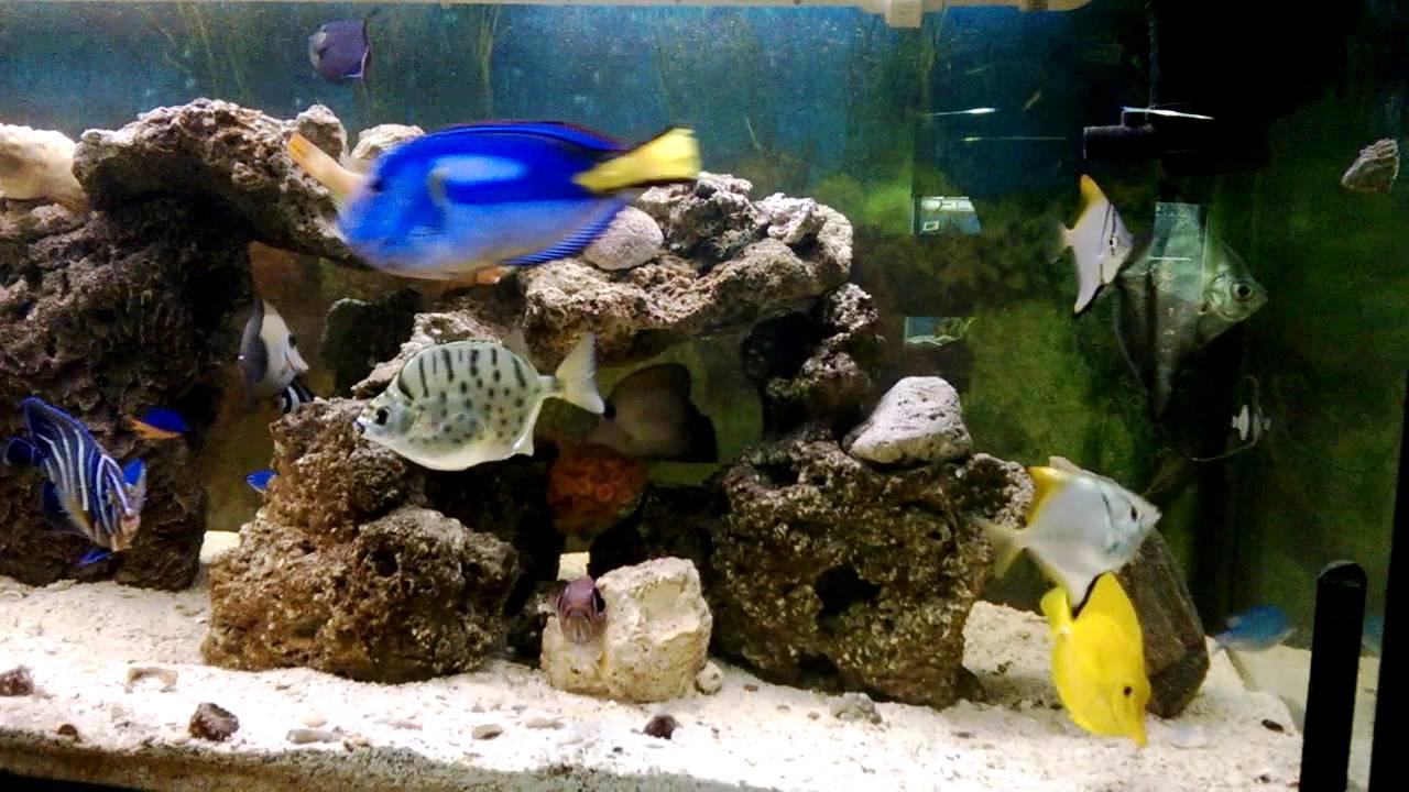 Acuario marino peces de arrecife parte 1 youtube for Peces de acuario marino