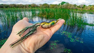 One EXPLOSIVE Frog Bite Saved My Day || Fishing The Bass Spawn In Florida (tough day)