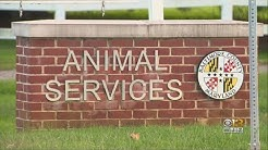 Officials Asking For Public's Help Identifying Woman Who Left Rabid Raccoon At Baltimore Co. Animal