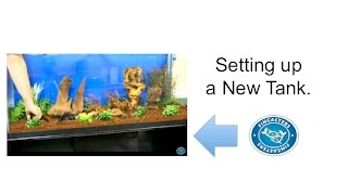 Fincasters Episode 17: How To Set Up Your New Freshwater Aquarium
