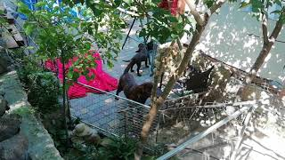 Незаконное разведение собак на захваченном участке многоэтажки