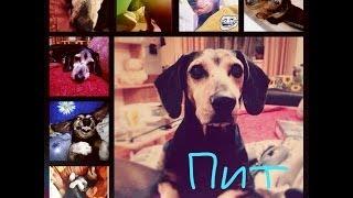 Моя собака Пит :* Самый лучший пес ❤