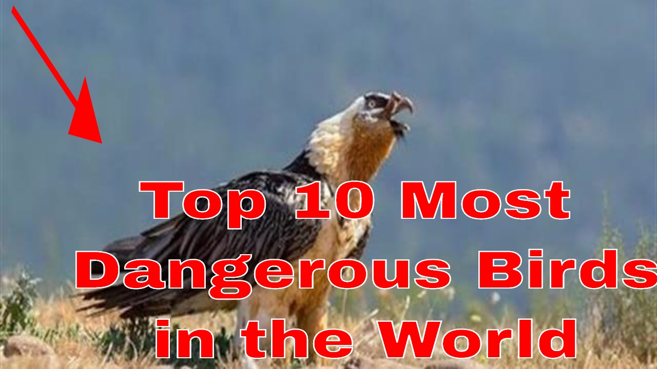most dangerous game and the birds Most dangerous birds in the world these are the most dangerous birds in the world from the largest to the scariest birds, do not mess with these deadly bir.