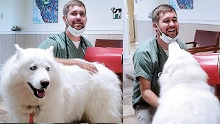 Can Monroe Have Puppies? Husky Goes To The Vet To See!