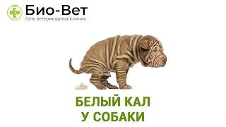 Белый Кал У Собаки & Почему У Собаки Белый Кал. Ветклиника Био-Вет