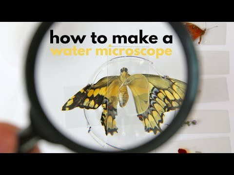 How to Make a Water Microscope