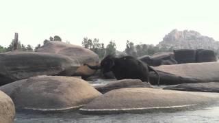 Jai Ganesha Elephant Medicine