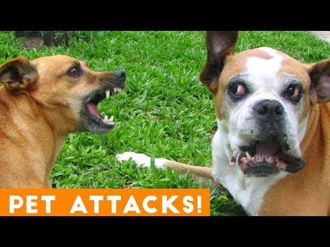 Funniest Animal Attacks Compilation August 2018  Funny Pet Videos