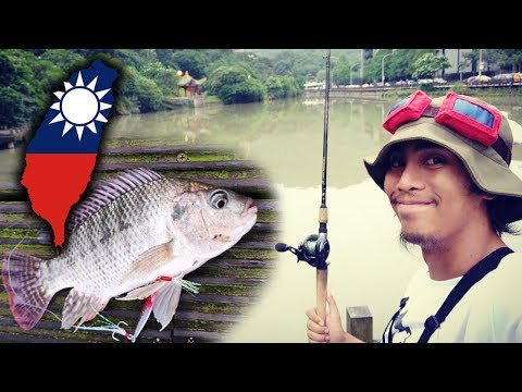 Went To Taiwan JUST TO GO FISHING! (Nangang Park, Taipei)