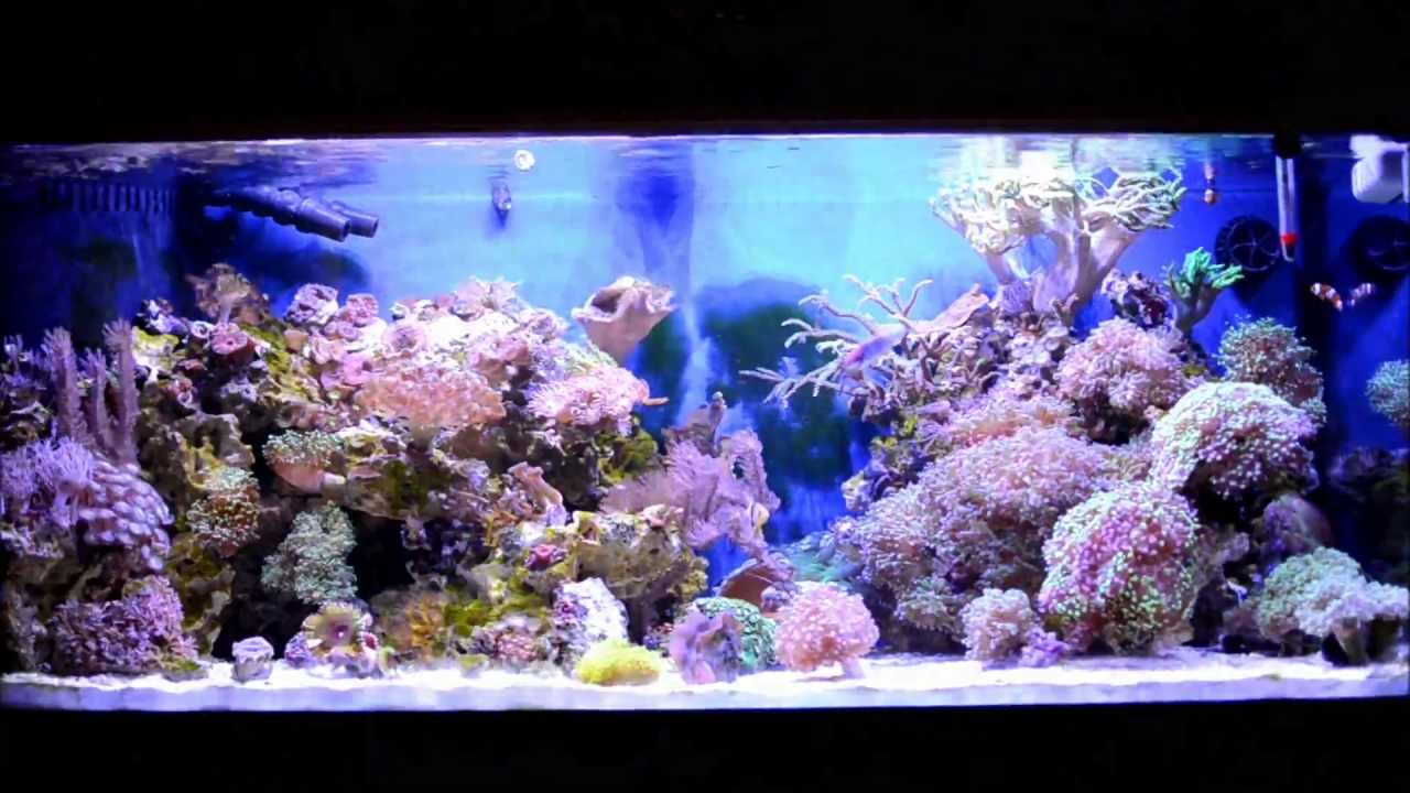 Coral reef fish aquarium 75 gallon hd saltwater tank doovi for Saltwater reef fish