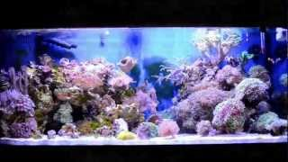 Coral Reef Fish Aquarium 75 Gallon Hd Saltwater Tank
