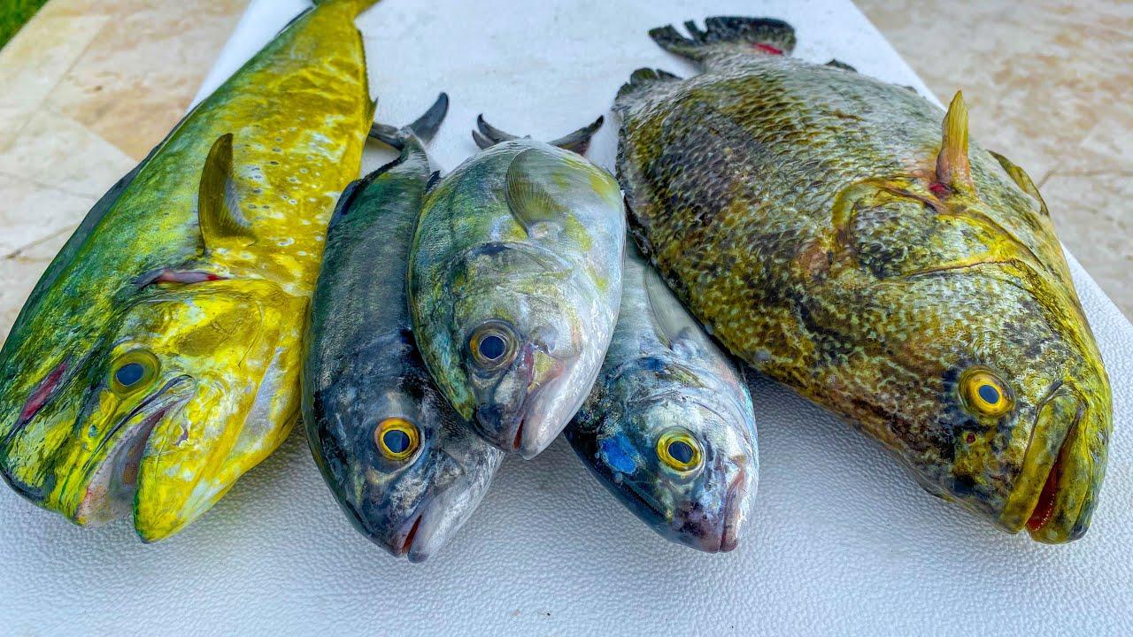 Blue Runner vs Dolphin! Catch Clean Cook (Deep Sea Fish Taste Test)