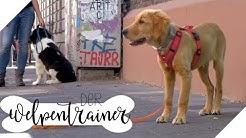 Bei Fuß! Wie lernt mein Hund das Kommando?   Der Welpentrainer   sixx