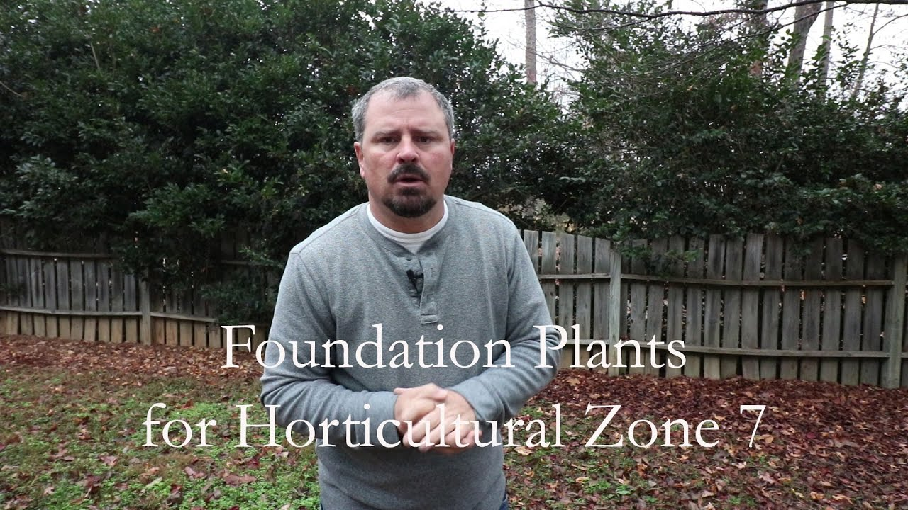 Great Low Maintenance Foundation Plants For Horticultural Zone 7 Part 1