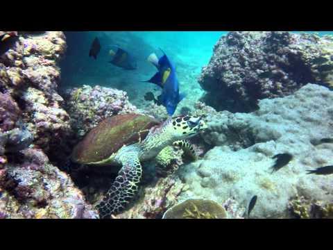 Dream Diving Weekend on Daymaniyat Islands, Oman