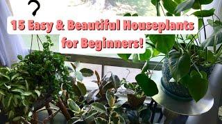 Easy Houseplants for Beginners + Care Tips!   EASY CARE INDOOR PLANTS FOR BEGINNERS