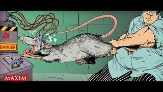 собаки крысы физиологи эксперименты Павлов рефлекс консультация психолога