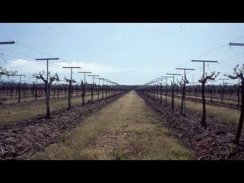 Grape Video 44   Vineyard Design