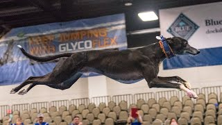 Spitfire Sets the New Indoor Iron Dog World Record and Becomes 2017 World Champion