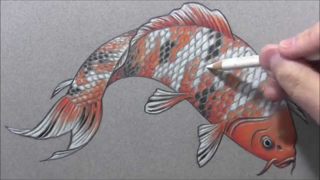 Wolf coy carp speed drawing youtube for The coy carp