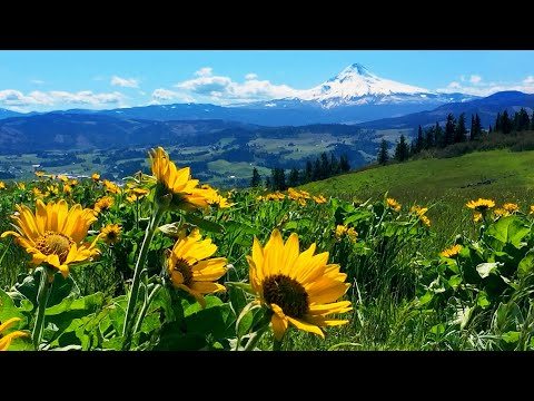 Relaxing Meadow with Ambient Nature Sounds, Wildflowers, and Mountain View - 8 Hours