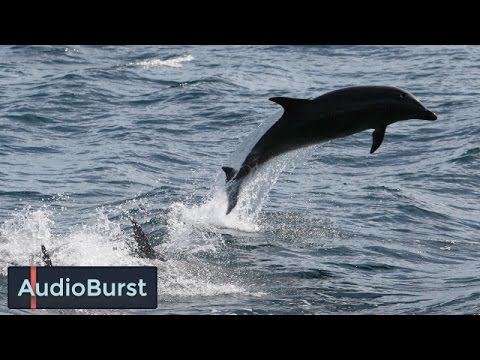 How Climate Change And Ocean Pollution Is Affecting Dolphins