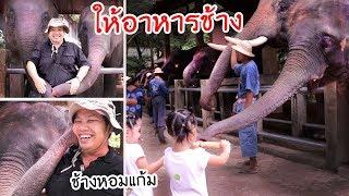 หนูยิ้มหนูแย้ม   ให้อาหารช้าง Maesa Elephant Camp