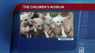 Fennec Foxes on FOX