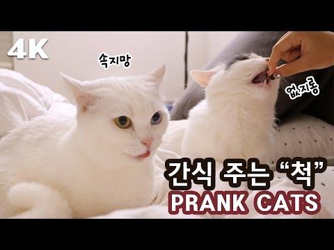 """고양이한테 간식 주는 """"척""""을 하면? [4K] PRANKS CATS WITH TREATS"""
