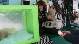 Птичий рынок  город Харьков.Январь 2019 год!!!!