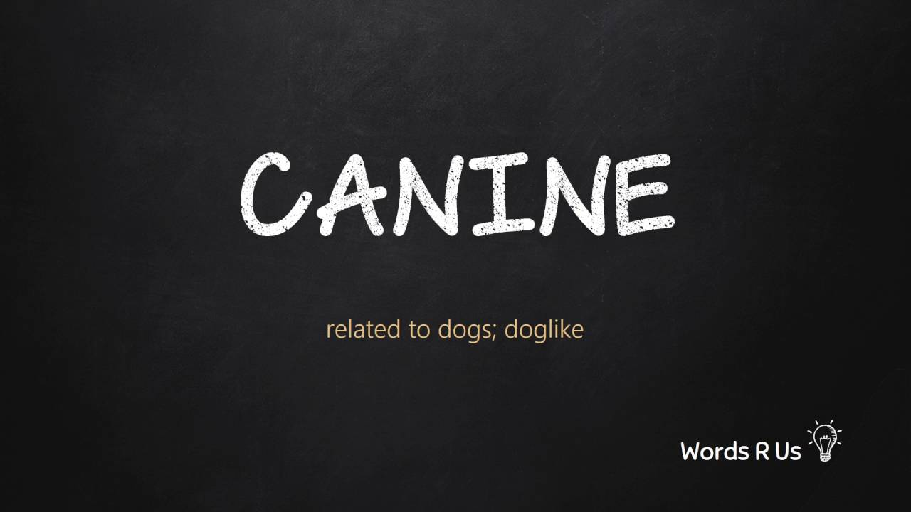 How to Pronounce CANINE in American English