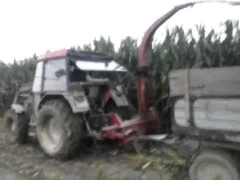 Siliranje Kukuruza U Lasovcu