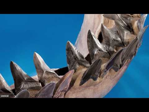 Download Youtube: 10 Facts on The Largest Shark: Megalodon!