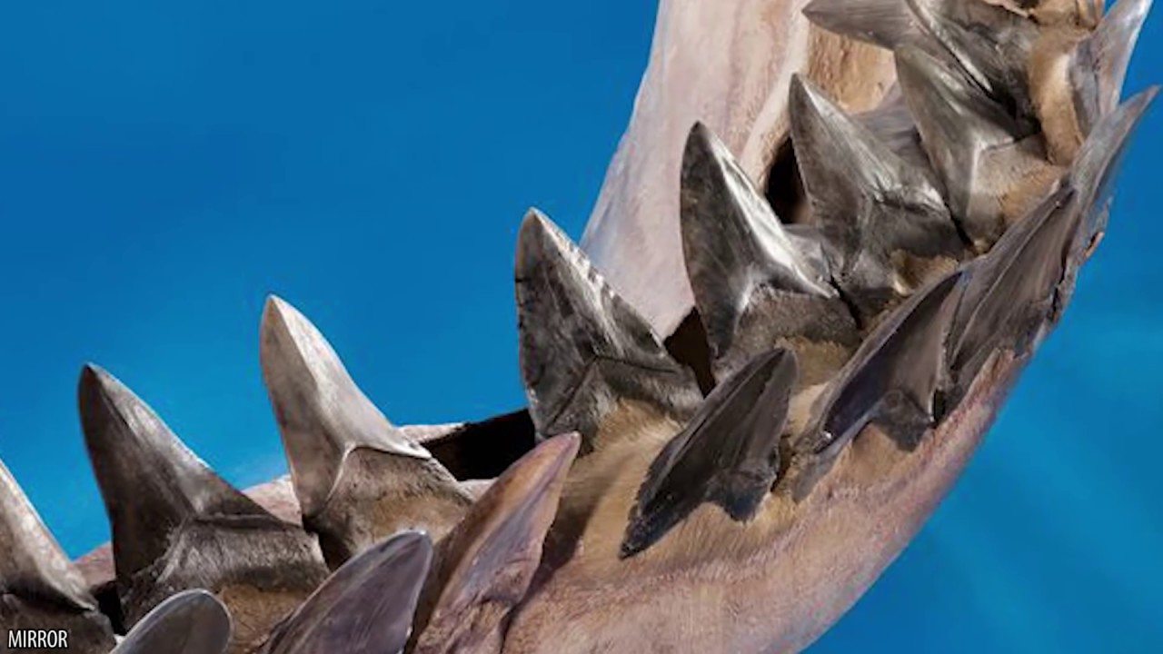 10 Facts on The Largest Shark: Megalodon! | Doovi