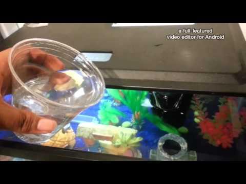 Fish Tank (ammonia Clear)