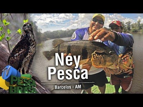 TV PESCA BRASIL - Ney Pesca -  Rios Aracá e Demeni - Barcelos - AM