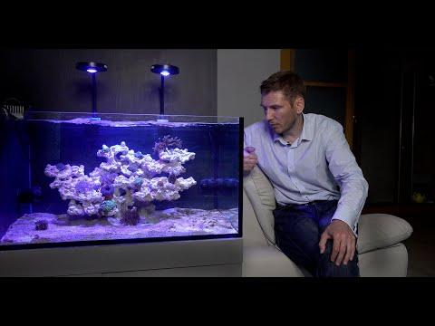 Видео: Запуск морского аквариума  4 серия Новые рыбки
