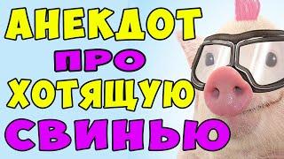 АНЕКДОТ про Свинью в Шлеме в Люльке и Мужика Самые смешные свежие анекдоты