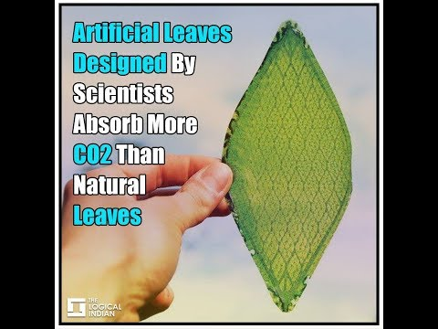 Artificial Leaves Designed By Scientists Absorb More CO2 Than Natural Leaves