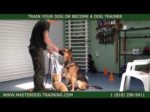 Master Dog Training - One Owner - Multiple Dogs - Dog Training Classes