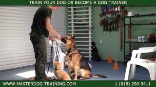 Master Dog Training - One Owner - Multiple Dogs