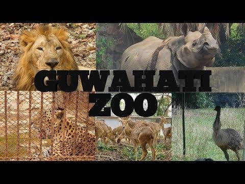 GUWAHATI ZOO |  The Assam State Zoo Cum Botanical Garden | Place To Visit In Guwahati | Assam