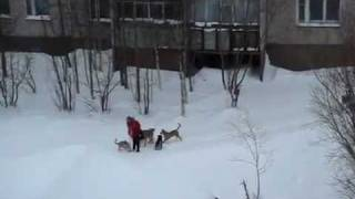 Мужик с лопатой спасает девушку от собак