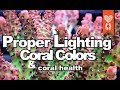 Proper Lighting and Coral Colors equals Healthy corals tissue & Zooxanthellae