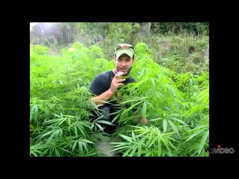 The Produk Gagal - Marijuana ( BORJA )