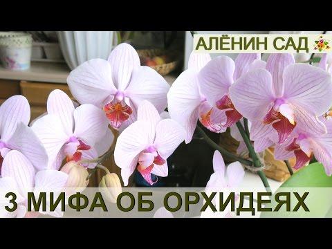 Все об орхидеях - Комнатные растения и цветы.